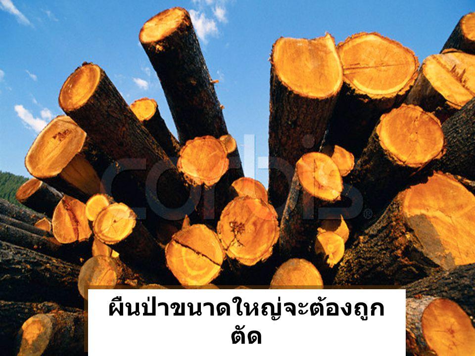 ผืนป่าขนาดใหญ่จะต้องถูก ตัด Our forests have been logged ผืนป่าขนาดใหญ่จะต้องถูก ตัด Our forests have been logged