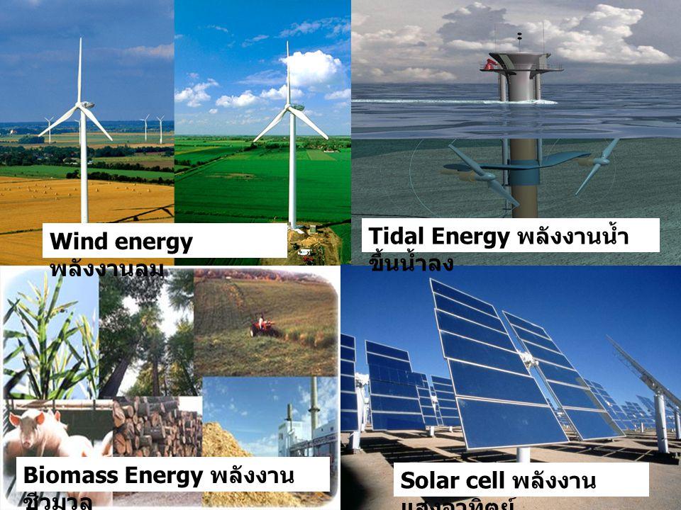 Wind energy พลังงานลม Solar cell พลังงาน แสงอาทิตย์ Biomass Energy พลังงาน ชีวมวล Tidal Energy พลังงานน้ำ ขึ้นน้ำลง