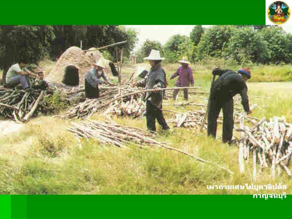 เผาถ่านเศษไม้ยูคาลิปตัส กาญจนบุรี