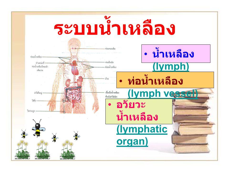 ระบบน้ำเหลือง น้ำเหลือง (lymph) (lymph) ท่อน้ำเหลือง (lymph vessel) (lymph vessel) อวัยวะ น้ำเหลือง (lymphatic organ) (lymphatic organ)