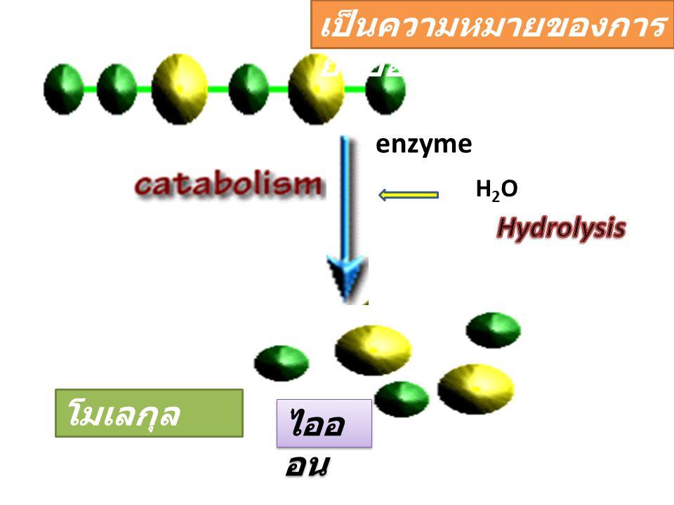 enzyme H2OH2O โมเลกุล เดียว ไออ อน เป็นความหมายของการ ย่อยอาหาร