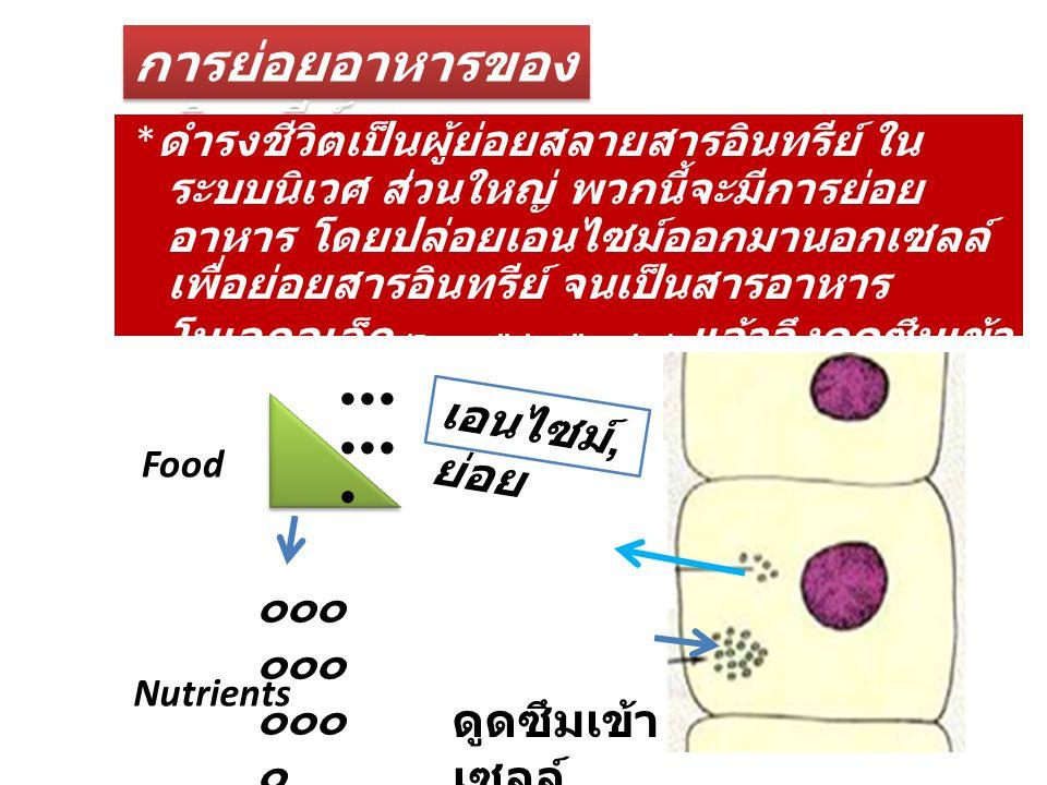 การย่อยอาหารของ จุลินทรีย์ * ดำรงชีวิตเป็นผู้ย่อยสลายสารอินทรีย์ ใน ระบบนิเวศ ส่วนใหญ่ พวกนี้จะมีการย่อย อาหาร โดยปล่อยเอนไซม์ออกมานอกเซลล์ เพื่อย่อยส