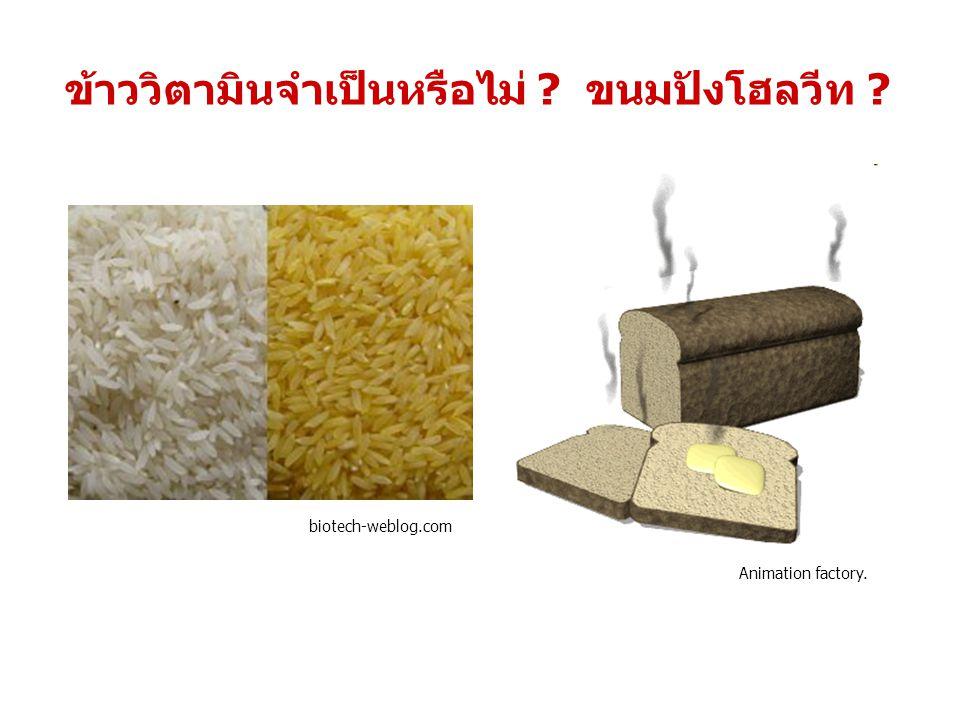 ข้าววิตามินจำเป็นหรือไม่ ? ขนมปังโฮลวีท ? biotech-weblog.com Animation factory.