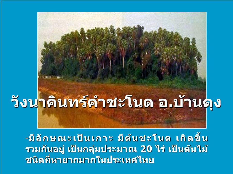 วังนาคินทร์คำชะโนด อ.บ้านดุง -มีลักษณะเป็นเกาะ มีต้นชะโนด เกิดขึ้น รวมกันอยู่ เป็นกลุ่มประมาณ 20 ไร่ เป็นต้นไม้ ชนิดที่หายากมากในประเทศไทย