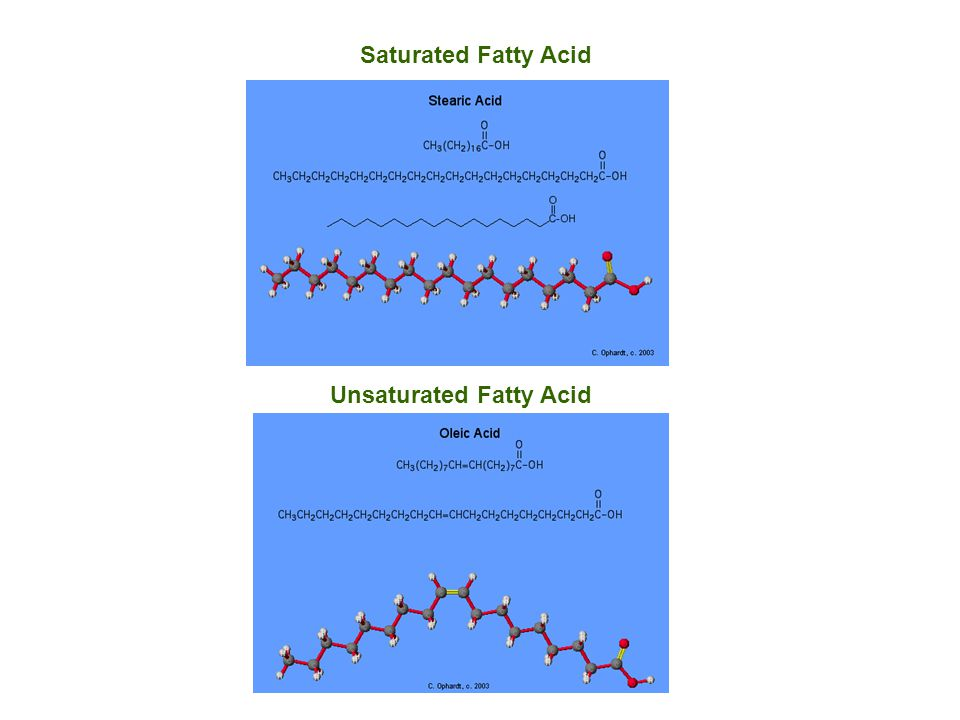 Common Fatty Acids Chemical Names and Descriptions of some Common Fatty Acids Common Name Carbon Atoms Double Bonds Scientific NameSources Butyric acid40 butanoic acid butterfat Caproic Acid60 hexanoic acid butterfat Caprylic Acid80 octanoic acid coconut oil Capric Acid100 decanoic acid coconut oil Lauric Acid120 dodecanoic acid coconut oil Myristic Acid140 tetradecanoic acid palm kernel oil Palmitic Acid160 hexadecanoic acid palm oil Palmitoleic Acid161 9-hexadecenoic acid animal fats Stearic Acid180 octadecanoic acid animal fats Oleic Acid181 9-octadecenoic acid olive oil Ricinoleic acid181 12-hydroxy-9-octadecenoic acid castor oil Vaccenic Acid181 11-octadecenoic acid butterfat Linoleic Acid182 9,12-octadecadienoic acid grape seed oil Alpha-Linolenic Acid (ALA) 183 9,12,15-octadecatrienoic acid flaxseed (linseed) oil Gamma-Linolenic Acid (GLA) 183 6,9,12-octadecatrienoic acid borage oil Arachidic Acid200 eicosanoic acid peanut oil, fish oil Gadoleic Acid201 9-eicosenoic acid fish oil Arachidonic Acid (AA)204 5,8,11,14-eicosatetraenoic acid liver fats EPA205 5,8,11,14,17-eicosapentaenoic acid fish oil Behenic acid220 docosanoic acid rapeseed oil Erucic acid221 13-docosenoic acid rapeseed oil DHA226 4,7,10,13,16,19-docosahexaenoic acid fish oil Lignoceric acid240 tetracosanoic acid small amounts in most fats