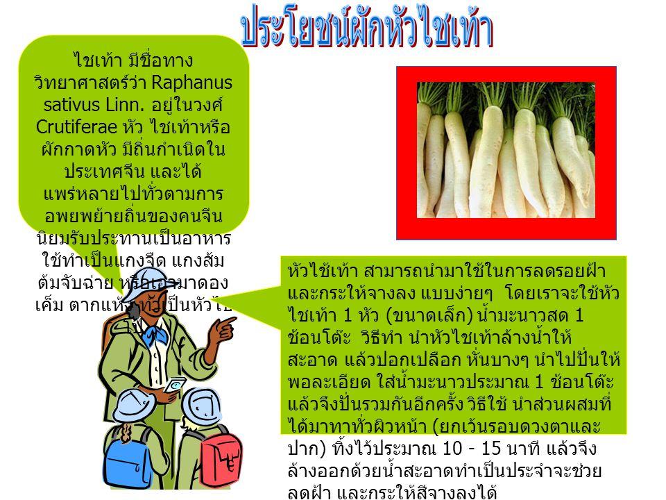 ไชเท้า มีชื่อทาง วิทยาศาสตร์ว่า Raphanus sativus Linn.