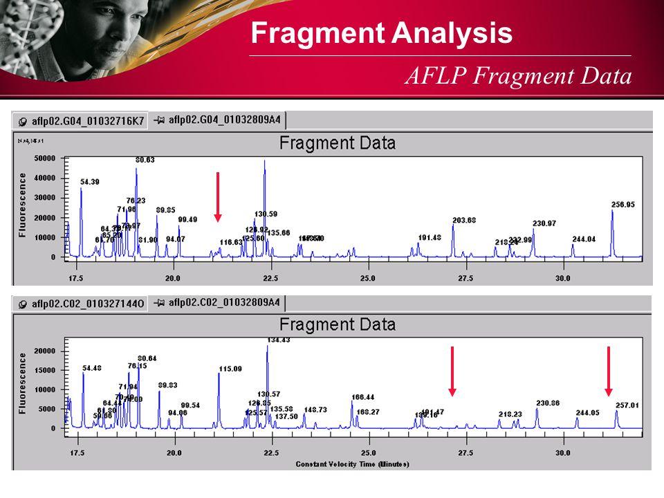 AFLP Fragment Data Fragment Analysis
