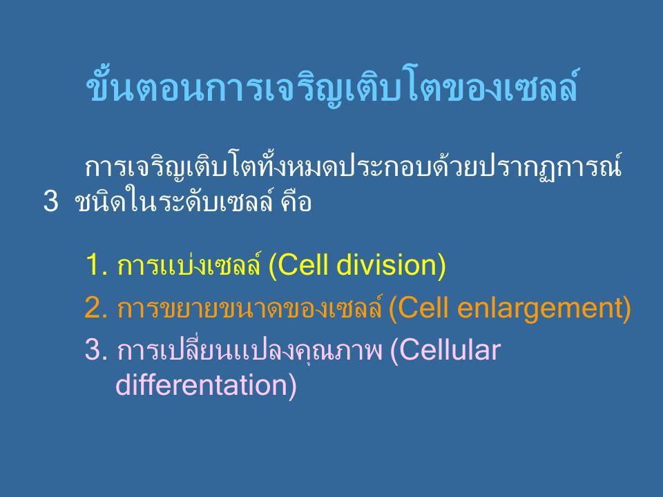 ขั้นตอนการเจริญเติบโตของเซลล์ การเจริญเติบโตทั้งหมดประกอบด้วยปรากฏการณ์ 3 ชนิดในระดับเซลล์ คือ 1. การแบ่งเซลล์ (Cell division) 2. การขยายขนาดของเซลล์