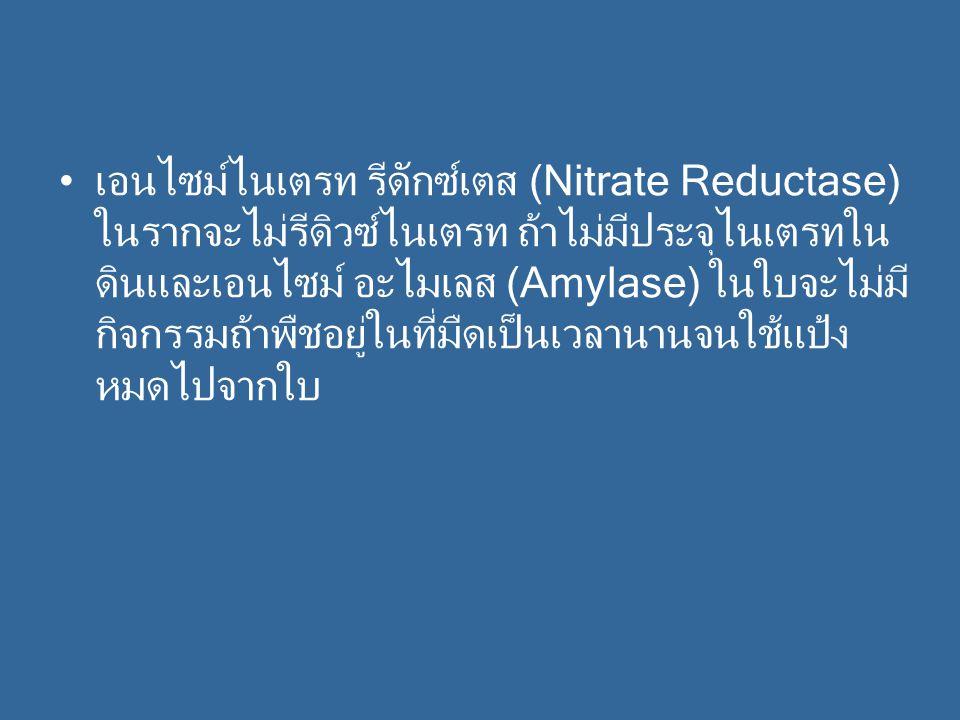 เอนไซม์ไนเตรท รีดักซ์เตส (Nitrate Reductase) ในรากจะไม่รีดิวซ์ไนเตรท ถ้าไม่มีประจุไนเตรทใน ดินและเอนไซม์ อะไมเลส (Amylase) ในใบจะไม่มี กิจกรรมถ้าพืชอยู่ในที่มืดเป็นเวลานานจนใช้แป้ง หมดไปจากใบ