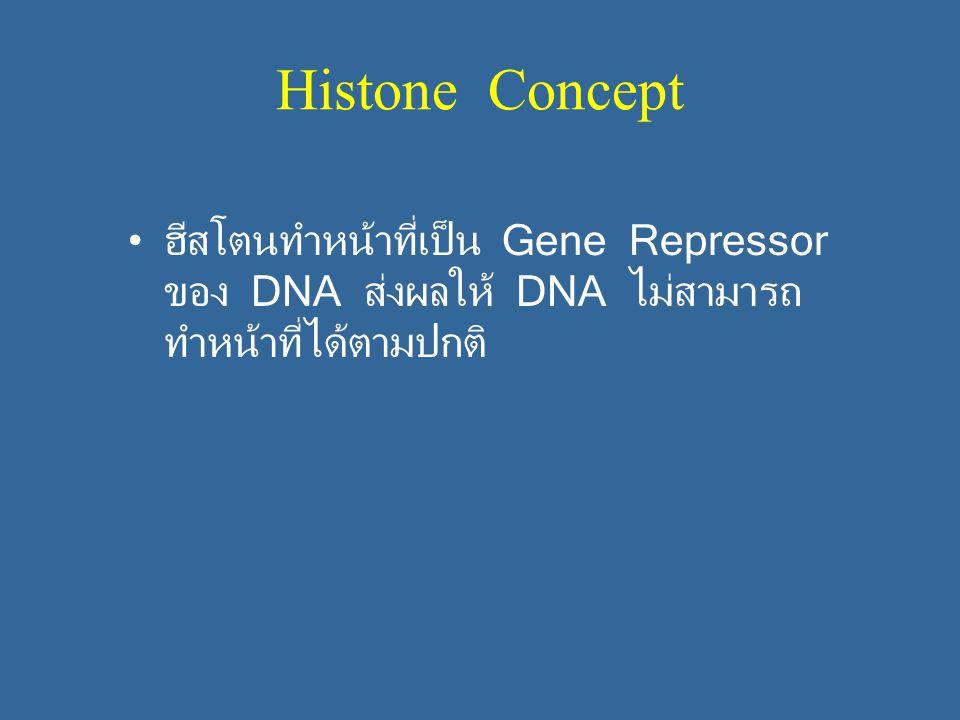 Histone Concept ฮีสโตนทำหน้าที่เป็น Gene Repressor ของ DNA ส่งผลให้ DNA ไม่สามารถ ทำหน้าที่ได้ตามปกติ