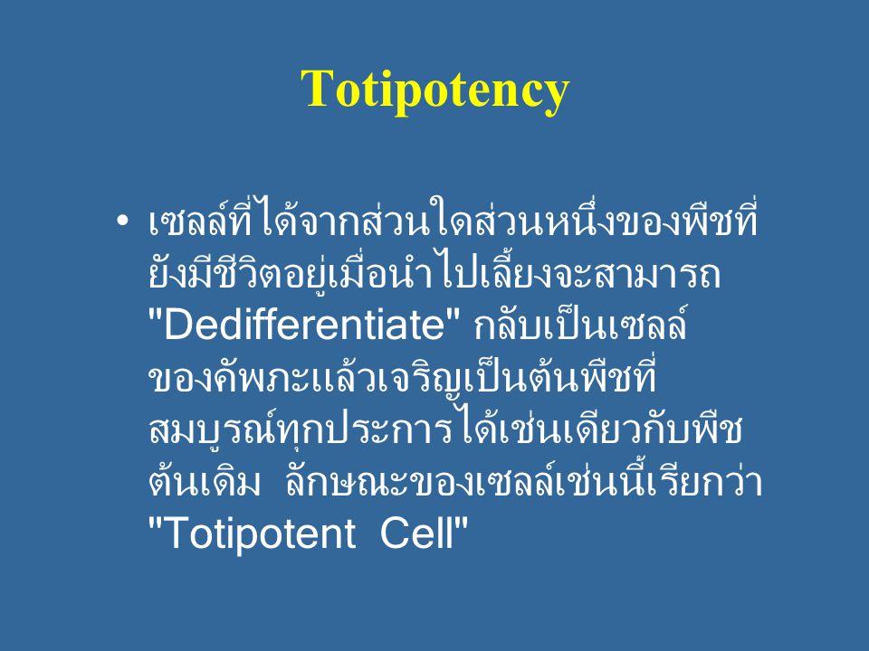 Totipotency เซลล์ที่ได้จากส่วนใดส่วนหนึ่งของพืชที่ ยังมีชีวิตอยู่เมื่อนำไปเลี้ยงจะสามารถ Dedifferentiate กลับเป็นเซลล์ ของคัพภะแล้วเจริญเป็นต้นพืชที่ สมบูรณ์ทุกประการได้เช่นเดียวกับพืช ต้นเดิม ลักษณะของเซลล์เช่นนี้เรียกว่า Totipotent Cell