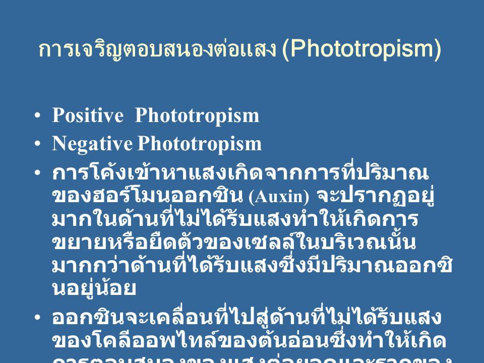 การเจริญตอบสนองต่อแสง (Phototropism) Positive Phototropism Negative Phototropism การโค้งเข้าหาแสงเกิดจากการที่ปริมาณ ของฮอร์โมนออกซิน (Auxin) จะปรากฏอ