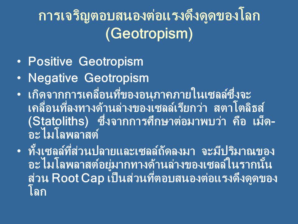 การเจริญตอบสนองต่อแรงดึงดูดของโลก (Geotropism) Positive Geotropism Negative Geotropism เกิดจากการเคลื่อนที่ของอนุภาคภายในเซลล์ซึ่งจะ เคลื่อนที่ลงทางด้านล่างของเซลล์เรียกว่า สตาโตลิธส์ (Statoliths) ซึ่งจากการศึกษาต่อมาพบว่า คือ เม็ด- อะไมโลพลาสต์ ทั้งเซลล์ที่ส่วนปลายและเซลล์ถัดลงมา จะมีปริมาณของ อะไมโลพลาสต์อยู่มากทางด้านล่างของเซลล์ในรากนั้น ส่วน Root Cap เป็นส่วนที่ตอบสนองต่อแรงดึงดูดของ โลก
