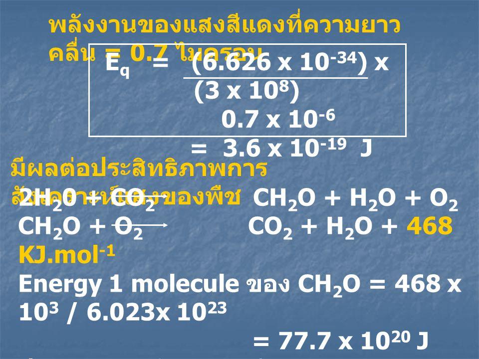 พลังงานของแสงสีแดงที่ความยาว คลื่น = 0.7 ไมครอน E q = (6.626 x 10 -34 ) x (3 x 10 8 ) 0.7 x 10 -6 = 3.6 x 10 -19 J มีผลต่อประสิทธิภาพการ สังเคราะห์แสง