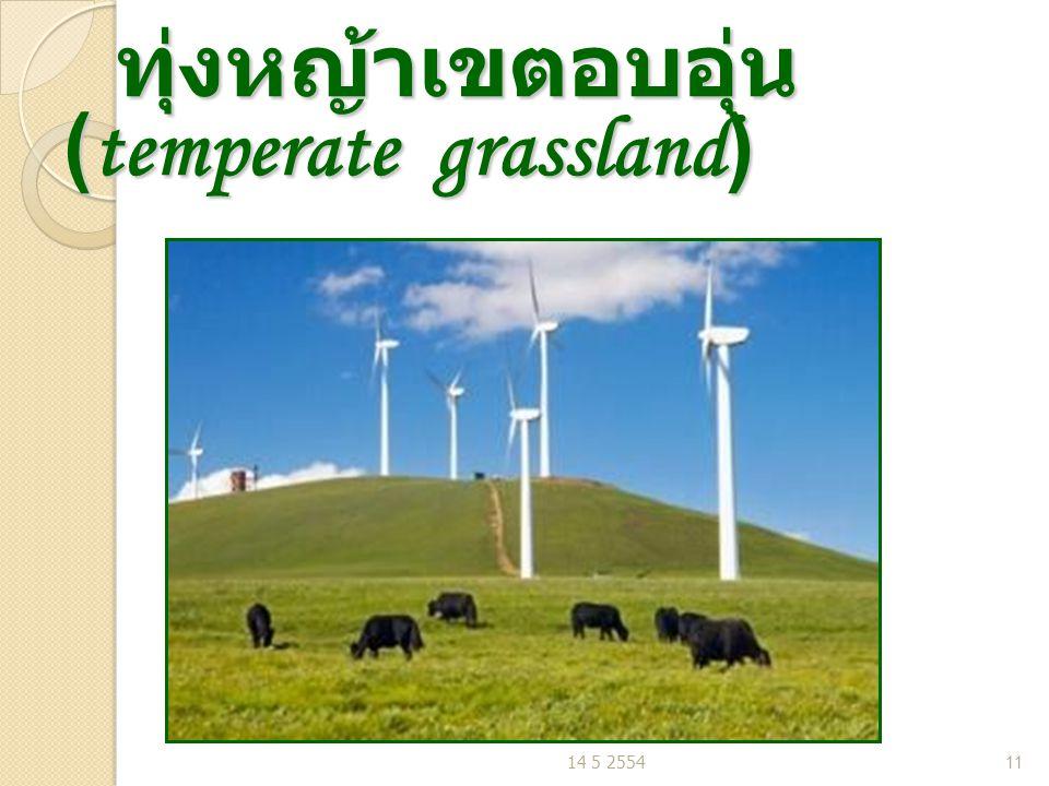 ทุ่งหญ้าเขตอบอุ่น (temperate grassland) ทุ่งหญ้าเขตอบอุ่น (temperate grassland) 14 5 255411