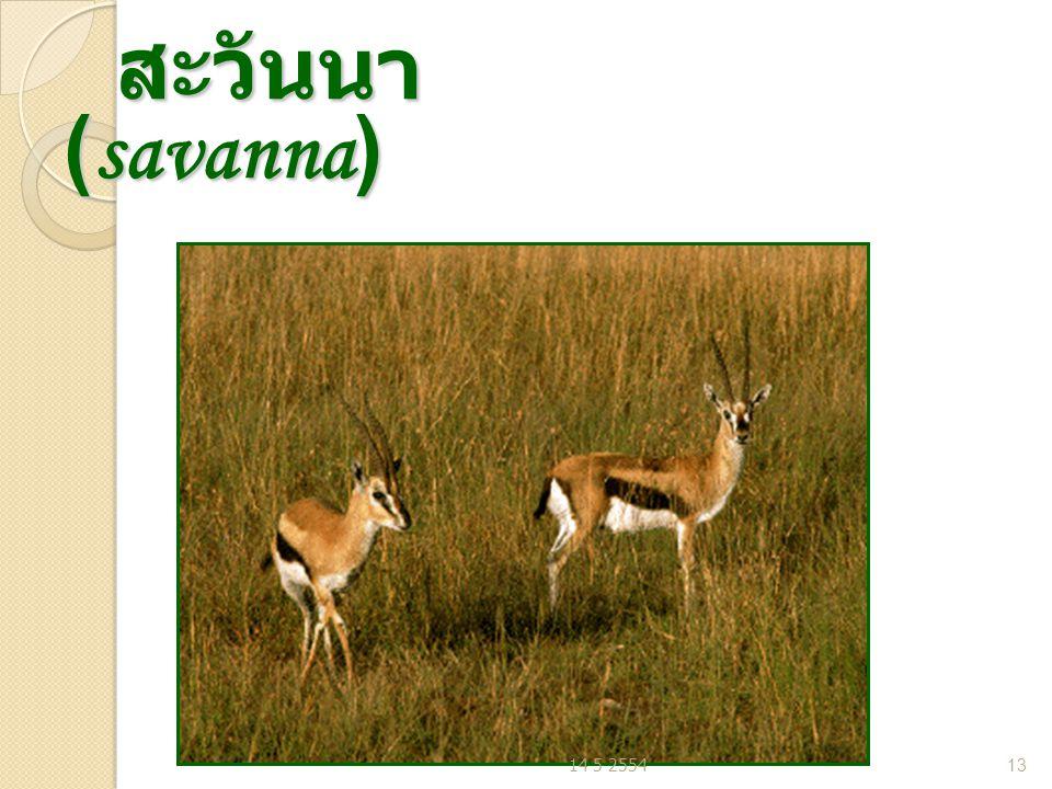 สะวันนา (savanna) สะวันนา (savanna) 14 5 255413