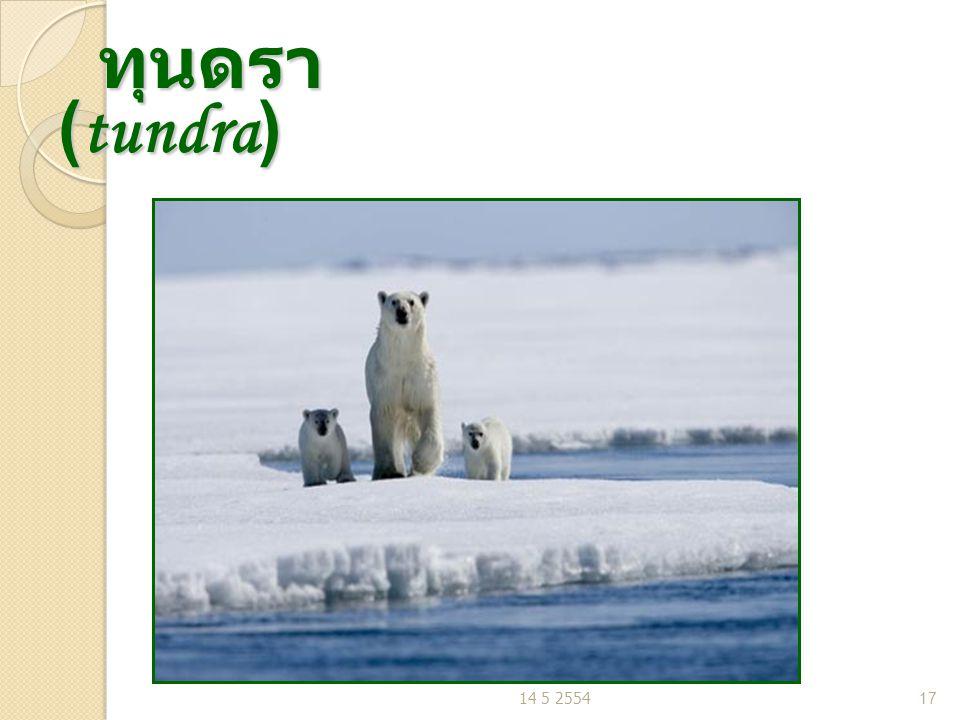 ทุนดรา (tundra) ทุนดรา (tundra) 14 5 255417