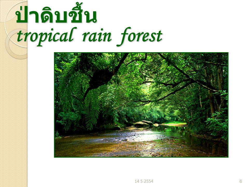 ป่าดิบชื้น tropical rain forest 14 5 25546