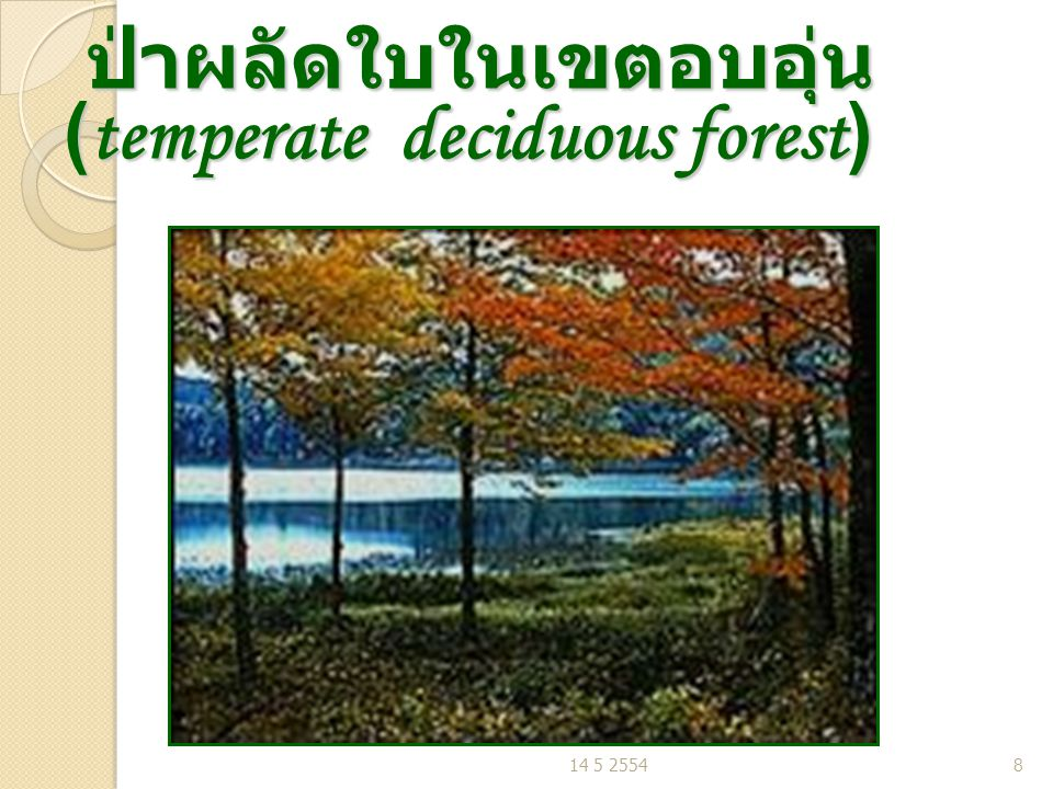 ป่าผลัดใบในเขตอบอุ่น (temperate deciduous forest) ป่าผลัดใบในเขตอบอุ่น (temperate deciduous forest) 14 5 25548