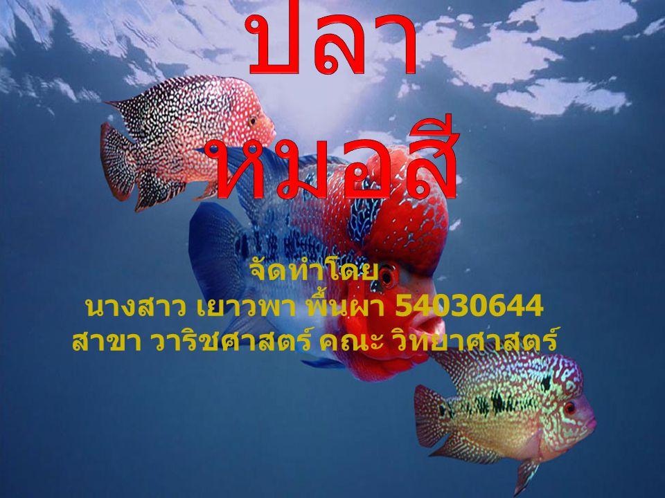 จัดทำโดย นางสาว เยาวพา พื้นผา 54030644 สาขา วาริชศาสตร์ คณะ วิทยาศาสตร์