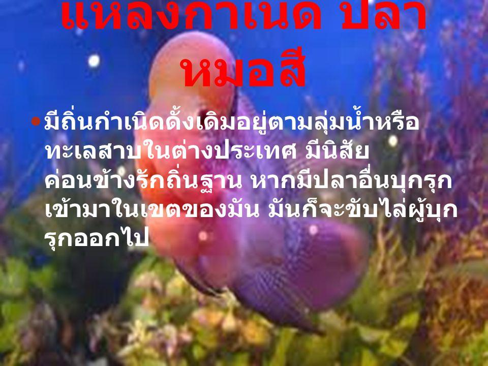 มีถิ่นกำเนิดดั้งเดิมอยู่ตามลุ่มน้ำหรือ ทะเลสาบในต่างประเทศ มีนิสัย ค่อนข้างรักถิ่นฐาน หากมีปลาอื่นบุกรุก เข้ามาในเขตของมัน มันก็จะขับไล่ผู้บุก รุกออกไป แหล่งกำเนิด ปลา หมอสี