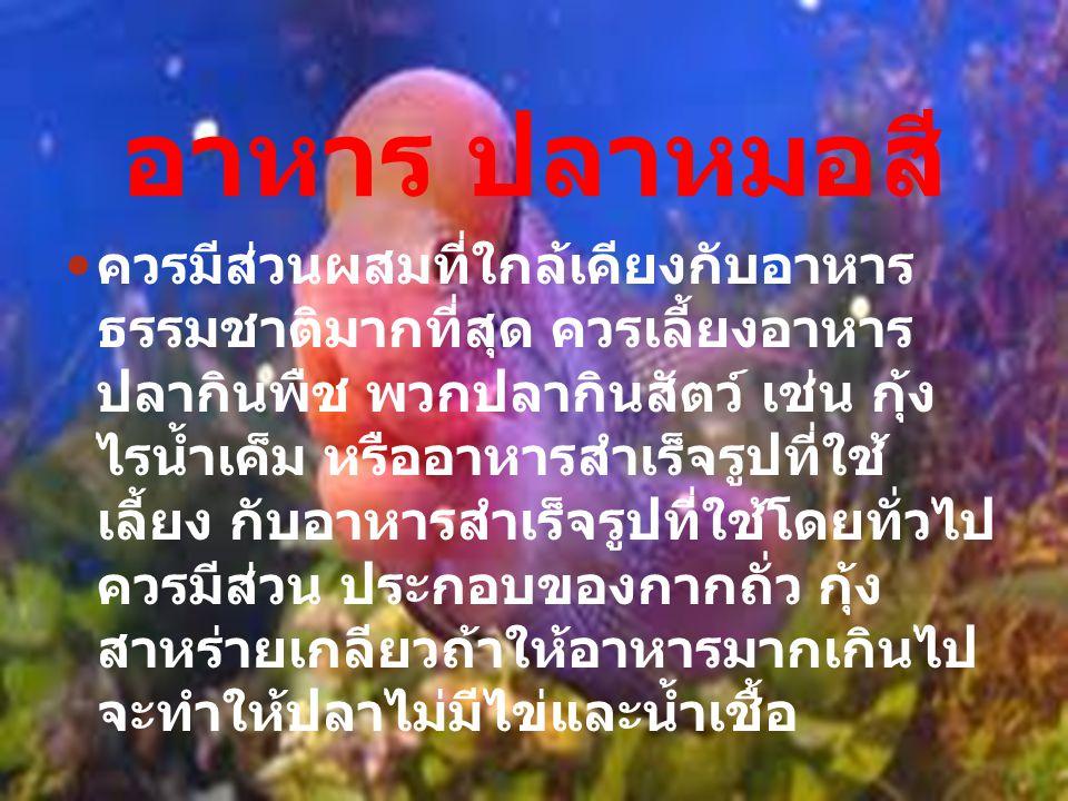 ธรรมชาติของปลา หมอสี เป็นปลาที่อดทน สามารถอดอาหารนับ สิบวัน หากท่านไม่อยู่บ้าน 5 – 10 วัน ตอนที่แม่ปลาที่ฟักไข่ด้วยปาก ต้องอม ไข่จนไข่ฟักเป็นตัว และอมต่อไป จนกระทั่งลูกปลาสามารถว่ายน้ำออก จากปาก เพื่อหากินอาหารต่อไป ซึ่งใช้ เวลาอีก 15-20 วัน ในระยะนี้แม่ปลาจะ ไม่กินอาหารใดๆ ทั้งสิ้น