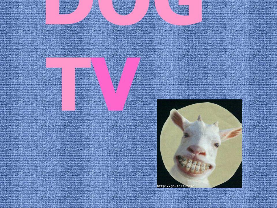 DOG TV TV.