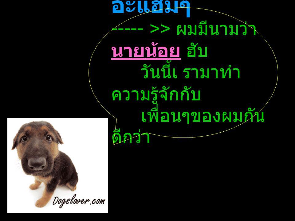 ไซบีเรีย ฮัสก ี SIBERIAN HUSKY สุนัขพันธุ์ นี้ถูกคัดเลือกพันธุ์ขึ้น เพื่อให้ทำหน้าที่ล่าสัตว์ และเฝ้ายาม แต่ต่อมา ถูกพัฒนาให้มี ลักษณะของ สุนัขลากเลื่อน