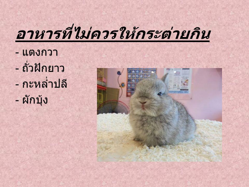 อาหารที่ไม่ควรให้กระต่ายกิน - แตงกวา - ถั่วฝักยาว - กะหล่ำปลี - ผักบุ้ง