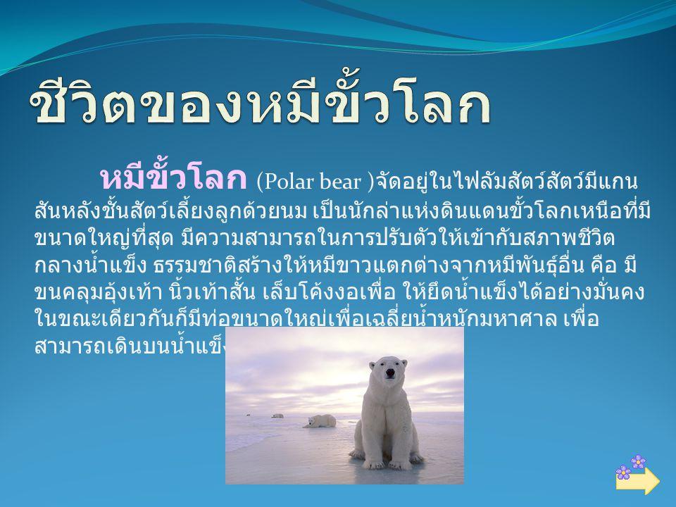 หมีขั้วโลก (Polar bear ) จัดอยู่ในไฟลัมสัตว์สัตว์มีแกน สันหลังชั้นสัตว์เลี้ยงลูกด้วยนม เป็นนักล่าแห่งดินแดนขั้วโลกเหนือที่มี ขนาดใหญ่ที่สุด มีความสามารถในการปรับตัวให้เข้ากับสภาพชีวิต กลางน้ำแข็ง ธรรมชาติสร้างให้หมีขาวแตกต่างจากหมีพันธุ์อื่น คือ มี ขนคลุมอุ้งเท้า นิ้วเท้าสั้น เล็บโค้งงอเพื่อ ให้ยึดน้ำแข็งได้อย่างมั่นคง ในขณะเดียวกันก็มีท่อขนาดใหญ่เพื่อเฉลี่ยน้ำหนักมหาศาล เพื่อ สามารถเดินบนน้ำแข็งบางๆ ได้