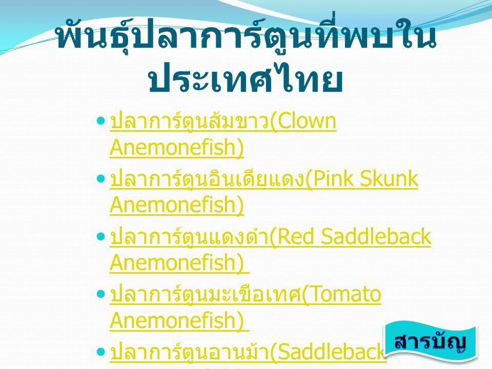 พันธุ์ปลาการ์ตูนที่พบใน ประเทศไทย ปลาการ์ตูนส้มขาว (Clown Anemonefish) ปลาการ์ตูนส้มขาว (Clown Anemonefish) ปลาการ์ตูนอินเดียแดง (Pink Skunk Anemonefi