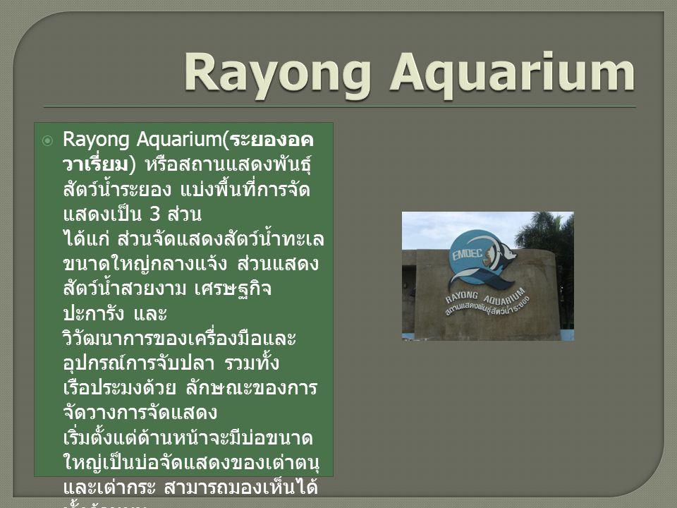  Rayong Aquarium( ระยองอค วาเรี่ยม ) หรือสถานแสดงพันธุ์ สัตว์น้ำระยอง แบ่งพื้นที่การจัด แสดงเป็น 3 ส่วน ได้แก่ ส่วนจัดแสดงสัตว์น้ำทะเล ขนาดใหญ่กลางแจ