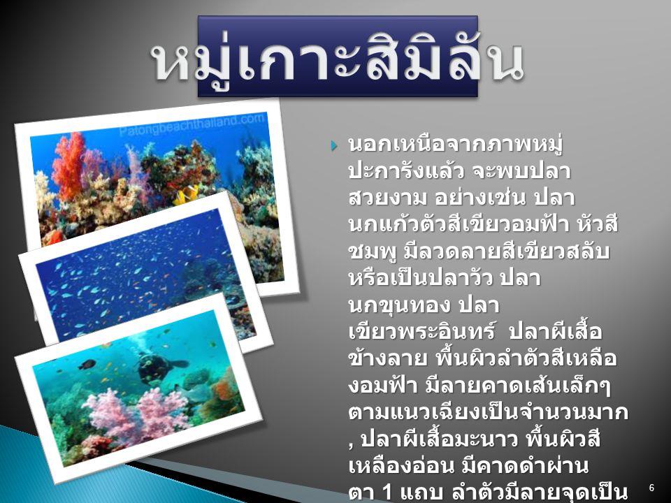 6  นอกเหนือจากภาพหมู่ ปะการังแล้ว จะพบปลา สวยงาม อย่างเช่น ปลา นกแก้วตัวสีเขียวอมฟ้า หัวสี ชมพู มีลวดลายสีเขียวสลับ หรือเป็นปลาวัว ปลา นกขุนทอง ปลา เ