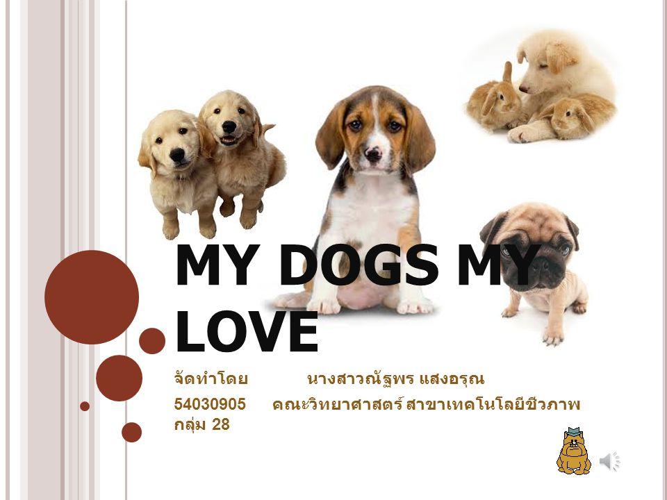 MY DOGS MY LOVE จัดทำโดยนางสาวณัฐพร แสงอรุณ 54030905 คณะวิทยาศาสตร์ สาขาเทคโนโลยีชีวภาพ กลุ่ม 28