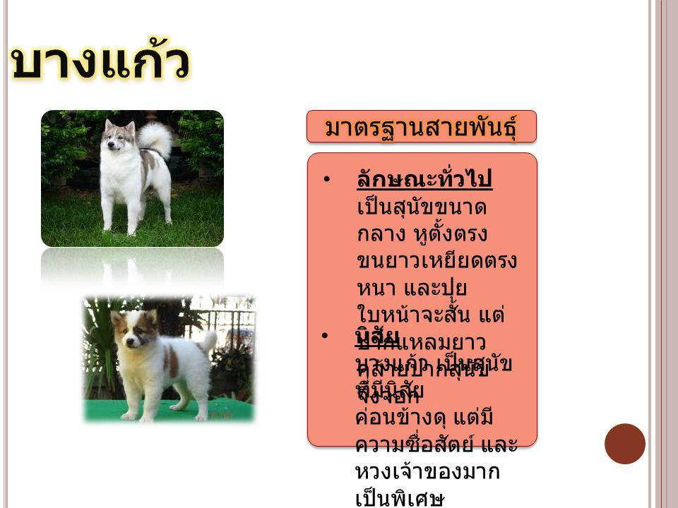 ลักษณะทั่วไป เป็นสุนัขขนาด กลาง หูตั้งตรง ขนยาวเหยียดตรง หนา และปุย ใบหน้าจะสั้น แต่ ปากแหลมยาว คล้ายปากสุนัข จิ้งจอก นิสัย บางแก้ว เป็นสุนัข ที่มีนิส