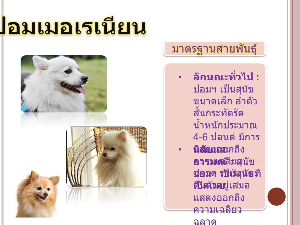 นิสัยและ อารมณ์ : สุนัข ปอมฯ เป็นสุนัขที่ เปิดเผย แสดงออกถึง ความเฉลียว ฉลาด ลักษณะทั่วไป : ปอมฯ เป็นสุนัข ขนาดเล็ก ลำตัว สั้นกระทัดรัด น้ำหนักประมาณ
