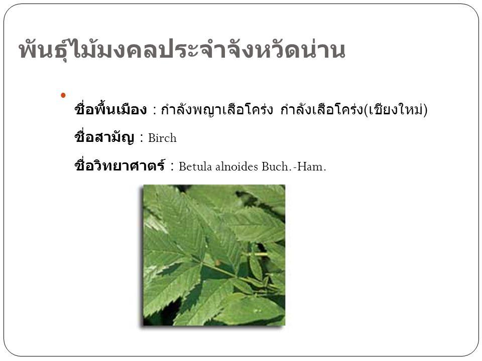 พันธุ์ไม้มงคลประจำจังหวัดน่าน ชื่อพื้นเมือง : กำลังพญาเสือโคร่ง กำลังเสือโคร่ง ( เชียงใหม่ ) ชื่อสามัญ : Birch ชื่อวิทยาศาตร์ : Betula alnoides Buch.-