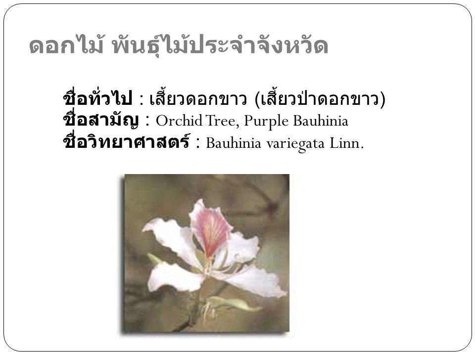 ดอกไม้ พันธุ์ไม้ประจำจังหวัด ชื่อทั่วไป : เสี้ยวดอกขาว ( เสี้ยวป่าดอกขาว ) ชื่อสามัญ : Orchid Tree, Purple Bauhinia ชื่อวิทยาศาสตร์ : Bauhinia variega