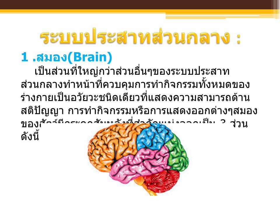  ระบบประสาทส่วนกลาง (The Central Nervous System หรือ Somatic Nervous System)  เป็นศูนย์กลางควบคุมการทำงานของร่างกาย  ทำงานพร้อมกันทั้งในด้านกลไกและ