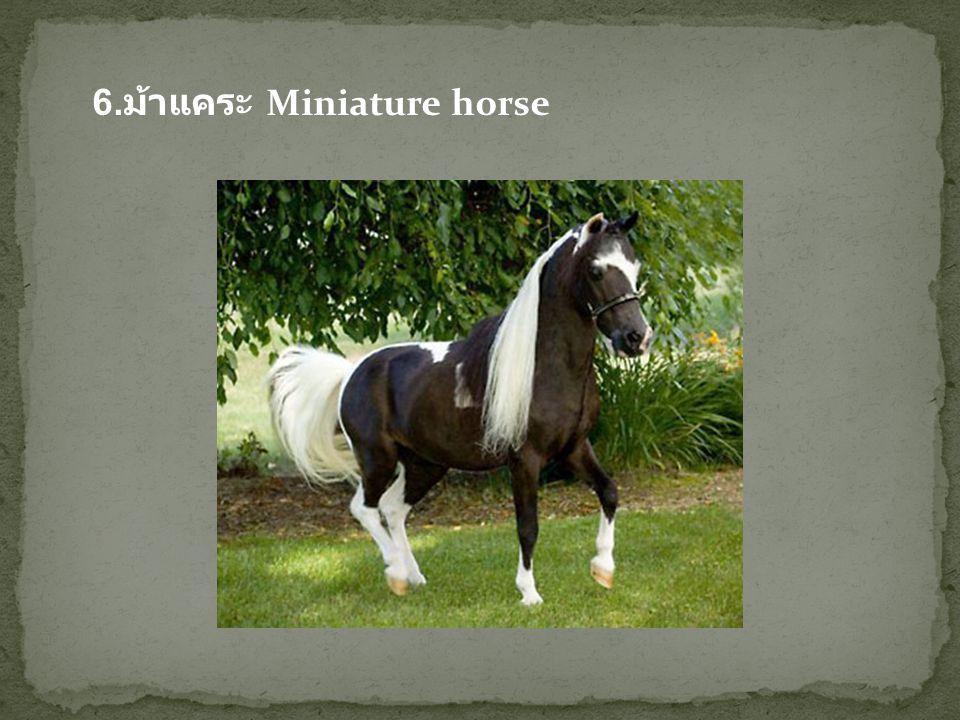 7. ม้าพันธุ์โฮลสไตน์ (The Holsteiner)