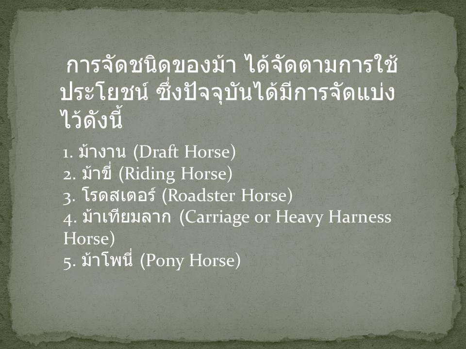 เป็นม้าที่ใช้ในการทำงานใน ไร่นาและคอกปศุสัตว์ งานเทียม เกวียนลากของหนัก ๆ บางครั้ง อาจใช้ขี่เข้าเมือง ม้างานมีหลาย พันธุ์ด้วยกัน เช่นม้าพันธุ์เบลเยี่ยม (Belgian) ม้าพันธุ์เพอร์เชอร์รอน (Percheron) ม้าพันธุ์ไชร์ (Shire) ม้าพันธุ์ไคล เดสเดล (Clydesdale) ม้าพันธุ์ซัฟโฟล์ค (Suffolk) ม้างานเป็นม้าที่มีขนาด ใหญ่ (Heavy Horses) สูงประมาณ ๑๕ - ๑๗ แฮนด์๑ (Hands) เมื่อโต เต็มที่มีขนาดน้ำหนัก ๖๑๔ - ๑, ๐๐๐ กิโลกรัม