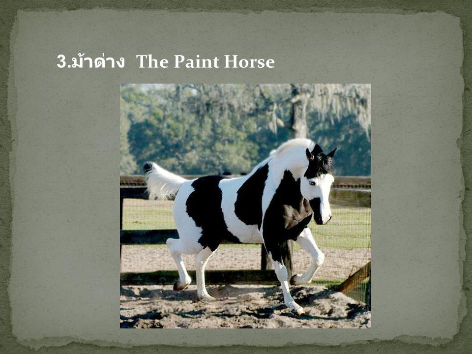 4. ม้าพันธุ์ลิปิซานเนอร์ The Lipizzaner