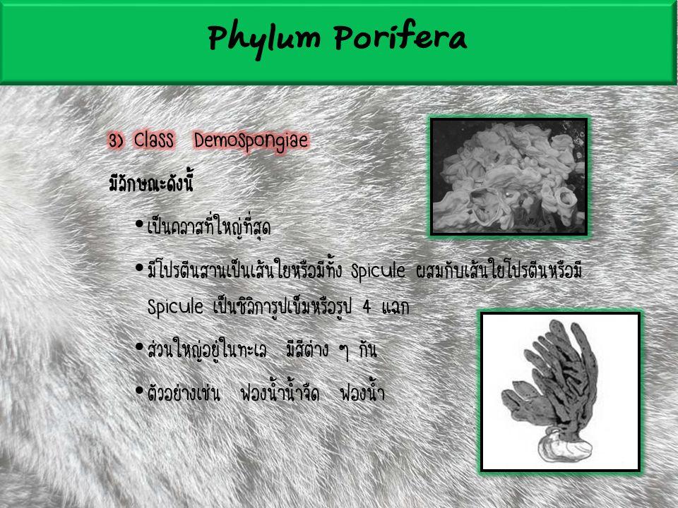 Phylum Coeleterata ลักษณะทั่วไปมีดังนี้ มีเนื้อเยื่อสองชั้น คือ Ectoderm และ Endoderm โดยมีชั้น Mesoderm คั่นกลาง มี Gastrovascular cavity เสมือนระบบย่อยอาหารและระบบหมุนเวียนสาร มี2รูปแบบคือ - Medusa (คว่ำ) มีปากด้านล่าง เคลื่อนที่โดนใช้ปากพ่นน้ำ - Polyp (หงาย) มีปากด้านบน มักเกาะนิ่งกับที่ มีหนวด (Tentacle) รอบปากใช้สำหรับจับเหยื่อ