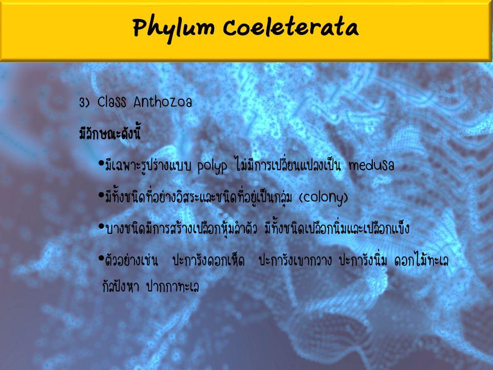 Phylum Coeleterata 3) Class Anthozoa มีลักษณะดังนี้ มีเฉพาะรูปร่างแบบ polyp ไม่มีการเปลี่ยนแปลงเป็น medusa มีทั้งชนิดที่อย่างอิสระและชนิดที่อยู่เป็นกล