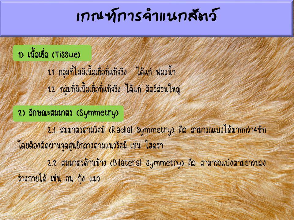 เกณฑ์การจำแนกสัตว์ 1) เนื้อเยื่อ (Tissue) 1.1 กลุ่มที่ไม่มีเนื้อเยื่อที่แท้จริง ได้แก่ ฟองน้ำ 1.2 กลุ่มที่มีเนื้อเยื่อที่แท้จริง ได้แก่ สัตว์ส่วนใหญ่