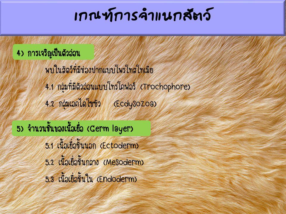 4) การเจริญเป็นตัวอ่อน พบในสัตว์ที่มีช่องปากแบบโพรโทสโทเมีย 4.1 กลุ่มที่มีตัวอ่อนแบบโทรโคฟอร์ (Trochophore) 4.2 กลุ่มเอคไดโซซัว (Ecdysozoa) 5) จำนวนชั