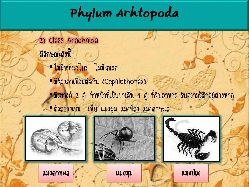 Phylum Arhtopoda แมงดาทะเล แมงมุม แมงป่อง