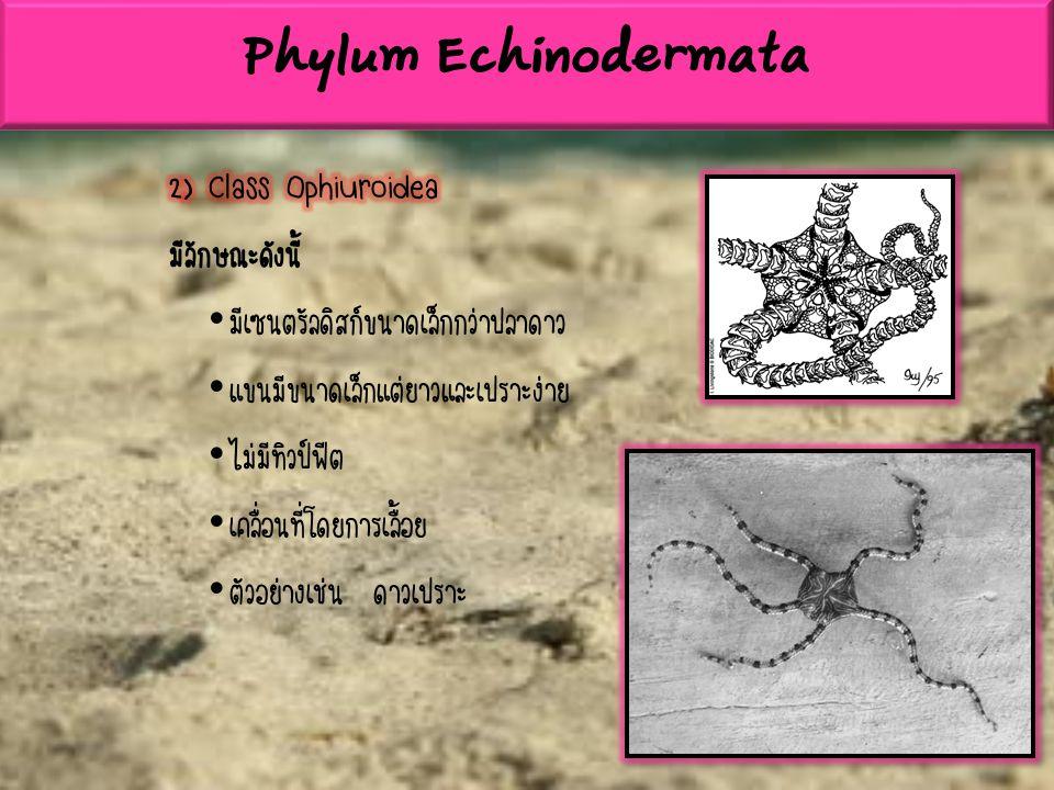 สัตว์ไฟลัมคอร์ดาตา เรียกว่า พวกคอร์เดต (chordate) สัตว์ในไฟลัมนี้ถึอว่ามี ความสำคัญที่สุด และมีวิวัฒนาการสูงสุด มีการปรับตัวทั้งโครงสร้างภายนอก โครงสร้างทางกาย วิภาค สรีรวิทยา พฤติกรรมมากกว่าสัตว์ กลุ่มอื่นๆ มีลักษณะสำคัญดังนี้ มีโนโตคอร์ด (Notochord) ซึ่งเป็นแกนค้ำจุนหรือพยุงกายเกิดขึ้นในระยะใดระยะ หนึ่งของชีวิต หรือตลอดชีวิต ในพวกสัตว์ชั้นสูงมีกระดูกอ่อนหรือกระดูกแข็งแทน โนโตคอร์ด มีไขสันหลังเป็นหลอดยาวกลวงอยู่ทางด้านหลัง (Dorsal hollow nerve tube) เหลือทางเดินอาหารซึ่งแตกต่างจากสัตว์พวกไม่มีกระดูกสันหลัง ซึ่งมีระบบประสาทอยู่ ทางด้านท้อง(Ventral nerve cord) ใต้ทางเดินอาหารและเป็นเส้นตัน Phylum Chordata