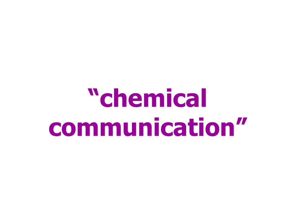 """chemical communication"""