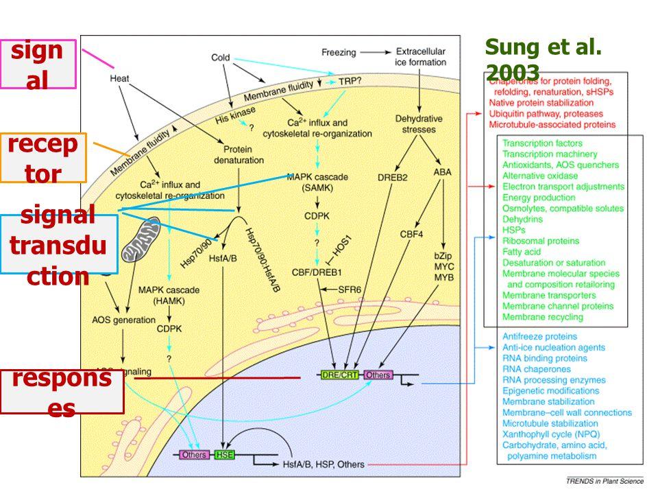 Sung et al. 2003 sign al recep tor signal transdu ction respons es